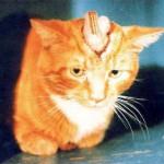Kitten skull experiment